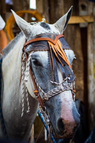 Amigo equino, inseparable del Sabanero, luces cansado. Sé que te cuidan pero no me gusta verte sirviendo.